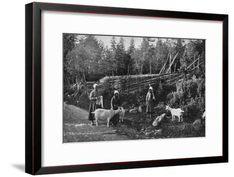 Goat Farming in Dalarna, Sweden, 1908-1909-Wald Zachrisson-Framed Art Print