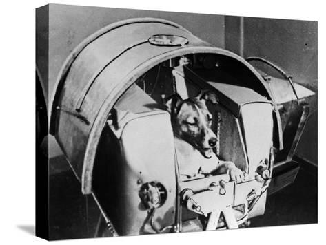 Laika, Russian Cosmonaut Dog, 1957--Stretched Canvas Print