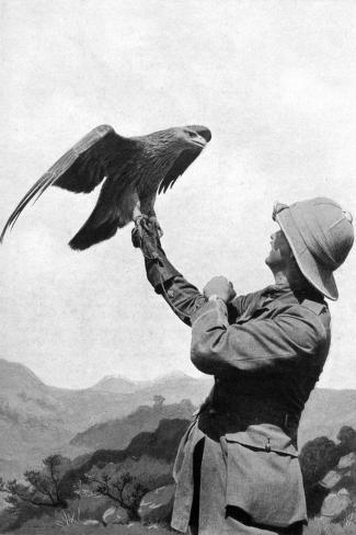 A British Officer with a Tamed Golden Eagle, Salonika, Greece, First World War, 1914-1918--Stretched Canvas Print