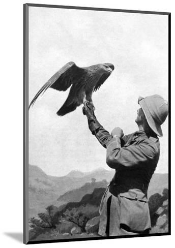 A British Officer with a Tamed Golden Eagle, Salonika, Greece, First World War, 1914-1918--Mounted Giclee Print