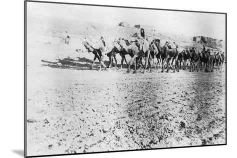 Camel Train, Mosul, Mesopotamia, 1918--Mounted Giclee Print