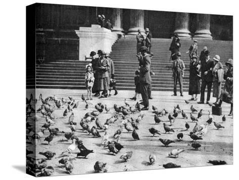 Pigeons in Trafalgar Square, London, 1926-1927--Stretched Canvas Print