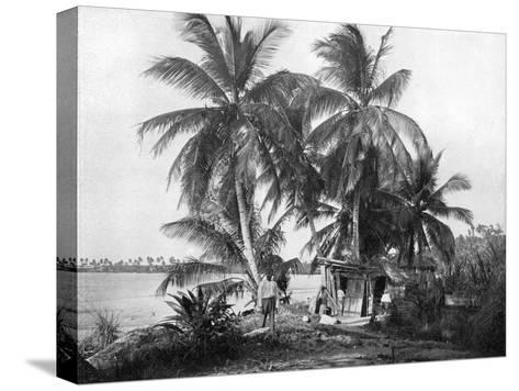 On the Road to Blue Hole, Port Antonio, Jamaica, C1905-Adolphe & Son Duperly-Stretched Canvas Print