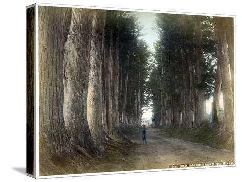 Imaichi Road at Nikko, Japan, Early 20th Century--Stretched Canvas Print