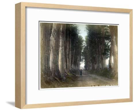 Imaichi Road at Nikko, Japan, Early 20th Century--Framed Art Print