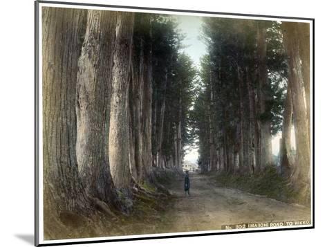 Imaichi Road at Nikko, Japan, Early 20th Century--Mounted Giclee Print