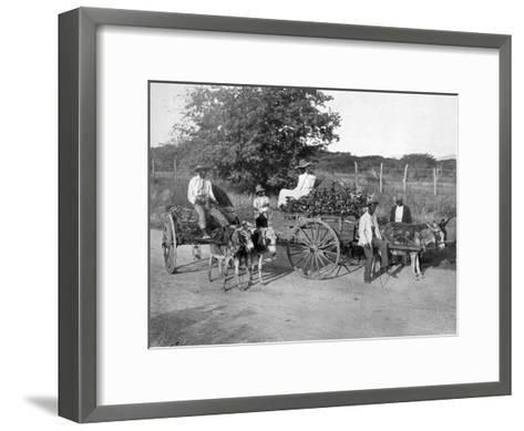 Wood Carts, Jamaica, C1905-Adolphe & Son Duperly-Framed Art Print