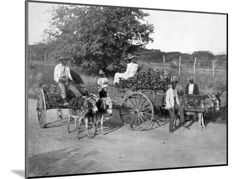 Wood Carts, Jamaica, C1905-Adolphe & Son Duperly-Mounted Giclee Print