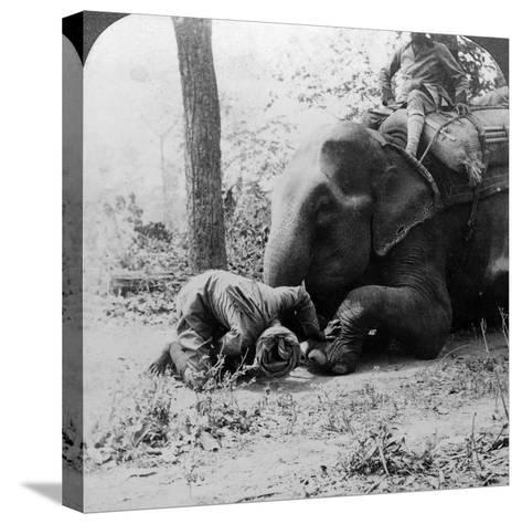 Mahout Removing a Thorn from an Elephant's Foot, Behar Tiger Shoot, India, C1900s-Underwood & Underwood-Stretched Canvas Print