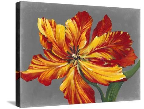 Tulip Portrait I-Tim O'toole-Stretched Canvas Print
