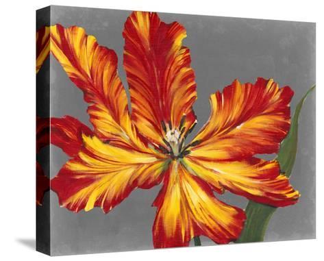 Tulip Portrait II-Tim O'toole-Stretched Canvas Print