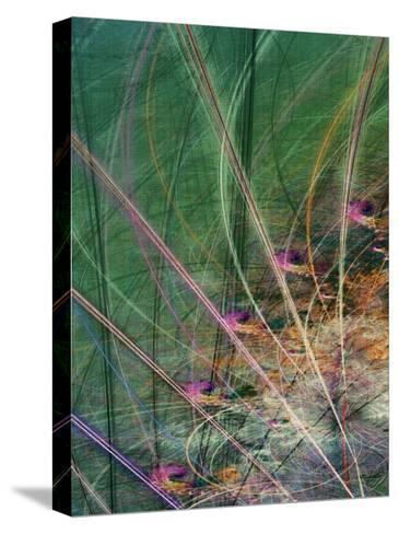 Wetland Vector II-James Burghardt-Stretched Canvas Print