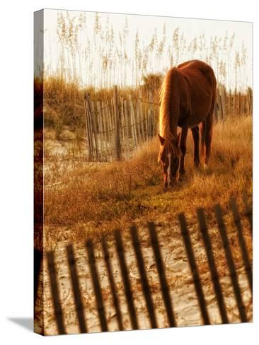 Solitary Light-PH Burchett-Stretched Canvas Print