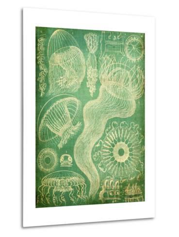 Sealife I-John Butler-Metal Print