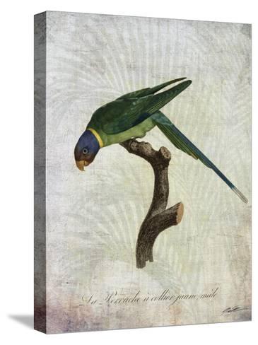 Parrot Jungle IV-John Butler-Stretched Canvas Print