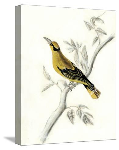 Rustic Aviary II-Naomi McCavitt-Stretched Canvas Print