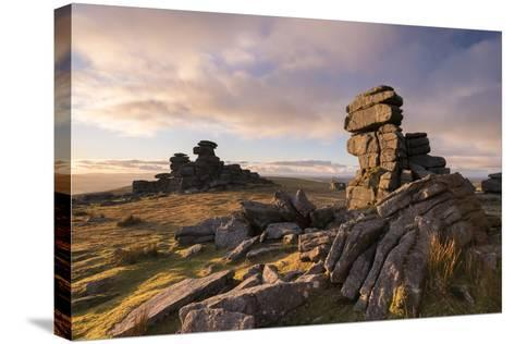 Rich Evening Sunlight at Great Staple Tor, Dartmoor National Park, Devon, England. Winter (January)-Adam Burton-Stretched Canvas Print
