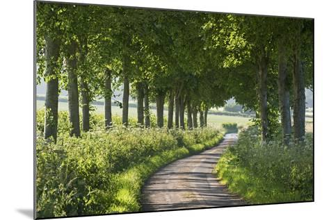 Winding Tree Lined Country Lane, Dorset, England. Summer (July)-Adam Burton-Mounted Photographic Print