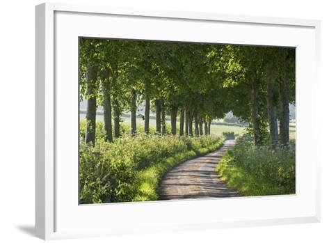 Winding Tree Lined Country Lane, Dorset, England. Summer (July)-Adam Burton-Framed Art Print