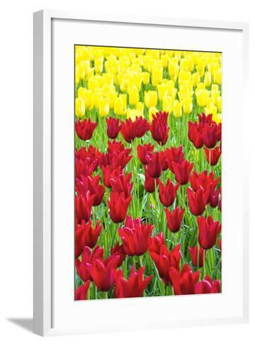 Tulips at KeUKenhof Gardens, Duin- En Bollenstreek, the Netherlands-Nadia Isakova-Framed Art Print