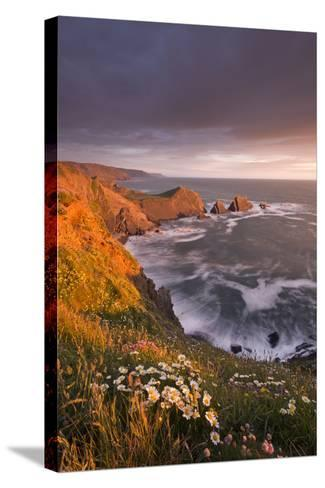 Wildflowers Growing on the Cliff Tops Above Hartland Point, Looking South to Screda Point, Devon-Adam Burton-Stretched Canvas Print