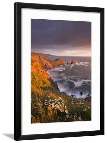 Wildflowers Growing on the Cliff Tops Above Hartland Point, Looking South to Screda Point, Devon-Adam Burton-Framed Art Print