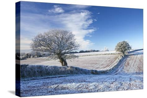 Hoar Frosted Farmland and Trees in Winter Time, Bow, Mid Devon, England. Winter-Adam Burton-Stretched Canvas Print