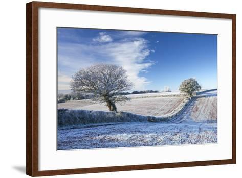 Hoar Frosted Farmland and Trees in Winter Time, Bow, Mid Devon, England. Winter-Adam Burton-Framed Art Print