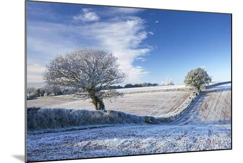 Hoar Frosted Farmland and Trees in Winter Time, Bow, Mid Devon, England. Winter-Adam Burton-Mounted Photographic Print