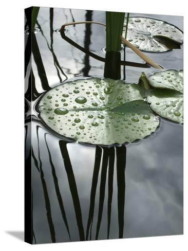 Water Lily Pond-Anna Miller-Stretched Canvas Print