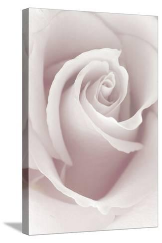 Rose Abstract-Anna Miller-Stretched Canvas Print