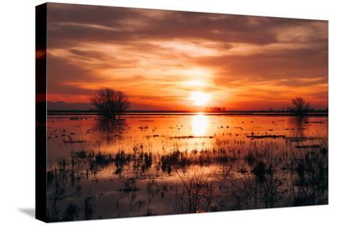 Winter Sunset at Merced Wildlife Refuge, California--Stretched Canvas Print