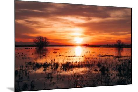 Winter Sunset at Merced Wildlife Refuge, California--Mounted Photographic Print
