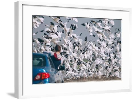 Snowbound, Snow Geese at Merced Wildlife Refuge--Framed Art Print