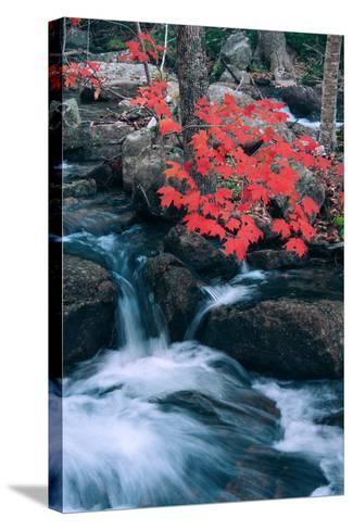Jordan Stream in Autumn I, Maine Coast--Stretched Canvas Print