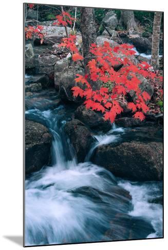 Jordan Stream in Autumn I, Maine Coast--Mounted Photographic Print