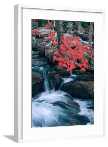 Jordan Stream in Autumn I, Maine Coast--Framed Art Print
