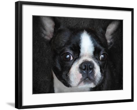 Boston Terrier Portrait-Jai Johnson-Framed Art Print