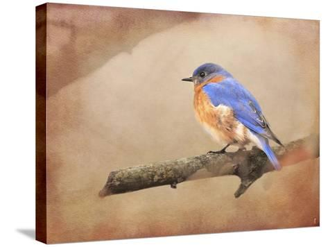 Braving Autumn Bluebird-Jai Johnson-Stretched Canvas Print