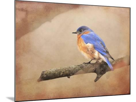 Braving Autumn Bluebird-Jai Johnson-Mounted Giclee Print