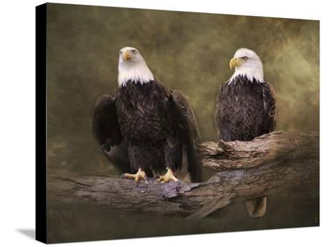 Mates Bald Eagle Pair-Jai Johnson-Stretched Canvas Print