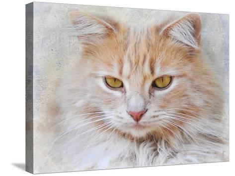 Orange Tabby Cat Portrait-Jai Johnson-Stretched Canvas Print