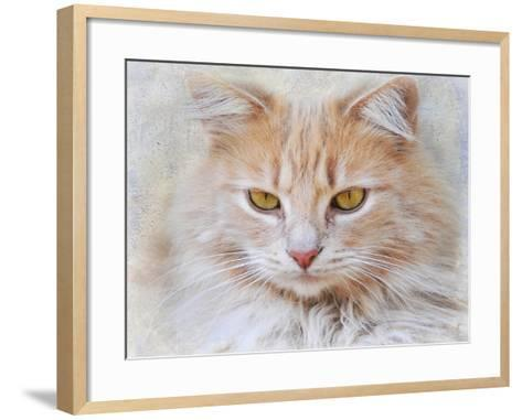 Orange Tabby Cat Portrait-Jai Johnson-Framed Art Print