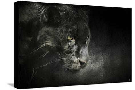 Out of the Shadows Black Leopard-Jai Johnson-Stretched Canvas Print
