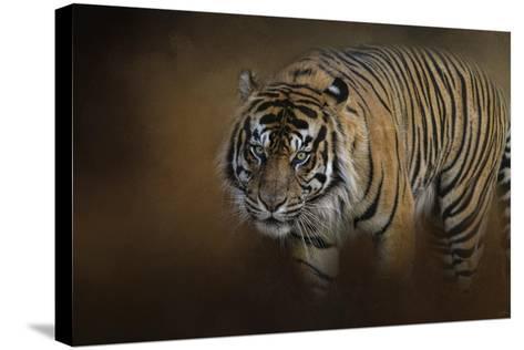 Bengal Stare-Jai Johnson-Stretched Canvas Print