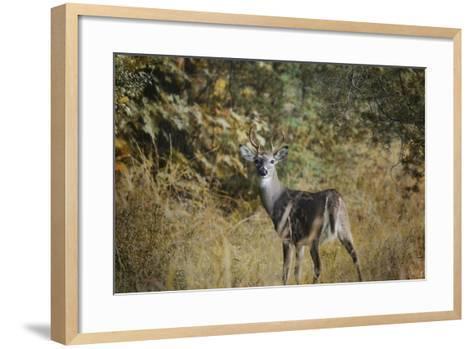 Buck in Autumn-Jai Johnson-Framed Art Print