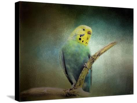 Budgie 1-Jai Johnson-Stretched Canvas Print