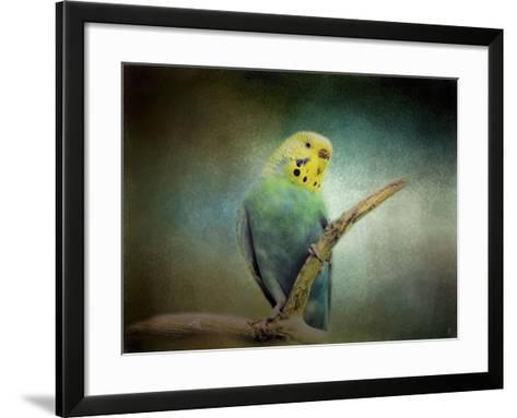 Budgie 1-Jai Johnson-Framed Art Print