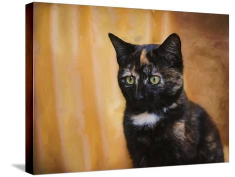 Jeweled Eyes Tortoiseshell Kitten-Jai Johnson-Stretched Canvas Print