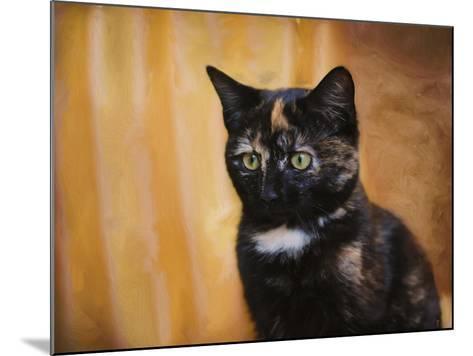 Jeweled Eyes Tortoiseshell Kitten-Jai Johnson-Mounted Giclee Print